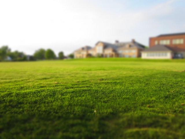 rumput tetangga lebih hijau